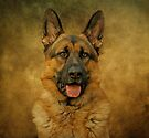 Chance - German Shepherd by Sandy Keeton