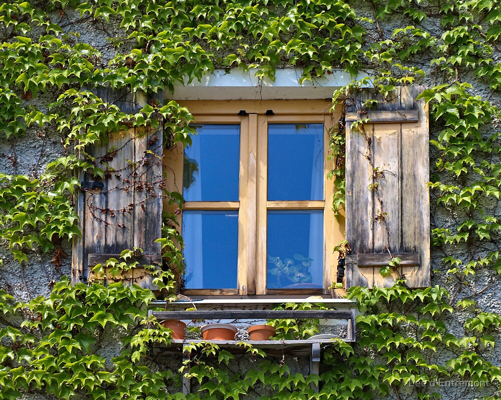 Ivy Covered Window. by Lee d'Entremont