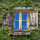 Ivy Covered Window. by Lee d&#x27;Entremont