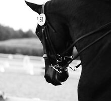 DRESSAGE KEYSO by picturesfrary