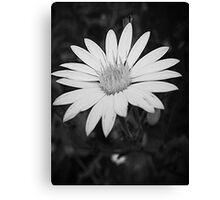 Monochrome Bloom Canvas Print
