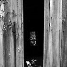 Peeking In by Elizabeth Carpenter