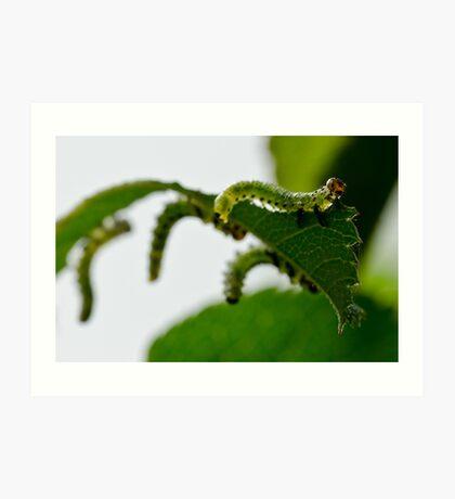 Garden Caterpillars Art Print