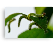 Garden Caterpillars Canvas Print