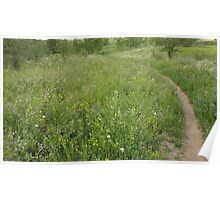 Hiking Trail Through WIldflowers Poster