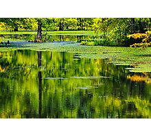 Reflections on a Cypress Pond Photographic Print