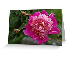 pink peony and 2 buds Greeting Card
