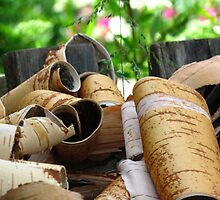 Birch Peels of Kartashevskaya by M-EK