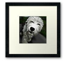 Old English Sheep Dog 2 Framed Print