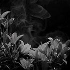 Twilight Flowers IV by gjameswyrick