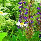 Wildflowers Dance in the Summer Breezes of Kartashevskaya by M-EK