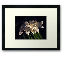 Where have all the flowers gone Framed Print