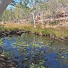 Along the walk to Galvans Gorge, Kimberley, Western Australia by Margaret  Hyde