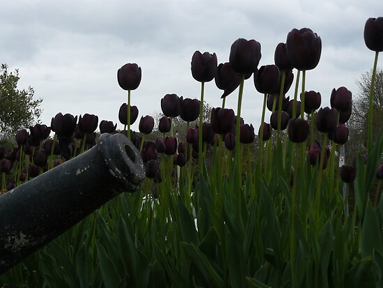 Purple tulips and a cannon by davidwatterson