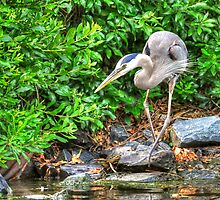Bow Legged Heron by Monte Morton
