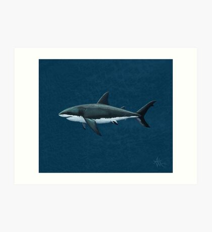 Carcharodon carcharias Art Print