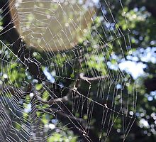 Sunny Spider Web by Cassie Jahn