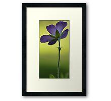 Wild Blue Geranium -- Facing the Sun Framed Print