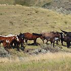 The Wild Horses by Debbie Roelle