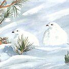 Winter Ptarmigan by ddonovan