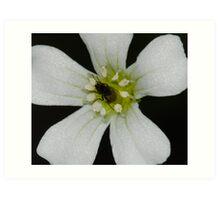 A baby fly inside tiny flower! Art Print