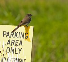 No Overnight Parking by Jeff Weymier