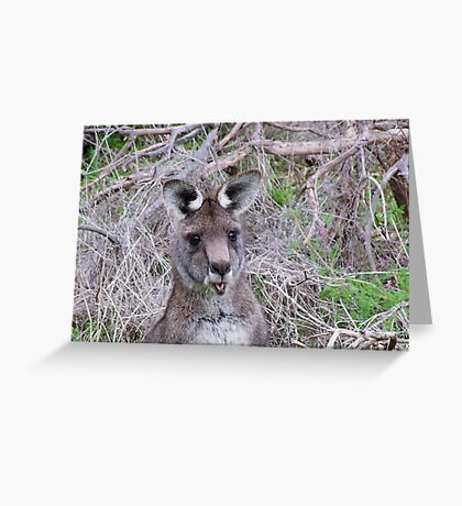 """What are you looking at?"" Greeting Card"