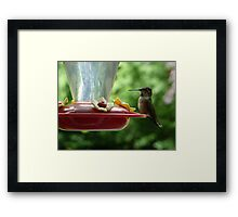 Mrs Hummingbird has landed Framed Print