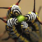 Four Caterpillars by Amran Noordin