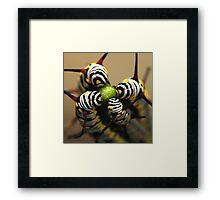 Four Caterpillars Framed Print