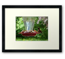 Mr Hummingbird stops by for a drink Framed Print