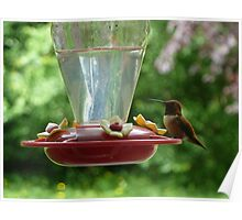 Mr Hummingbird stops by for a drink Poster
