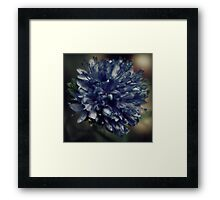 Finding Each Other.... Framed Print