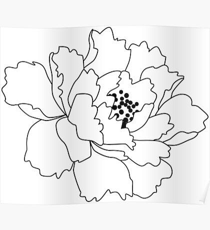 White Japanese Peony Flower Poster