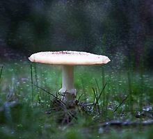 Mushroom Magik by White Owl