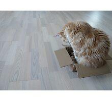 Cat Box Photographic Print