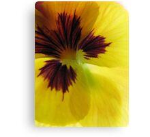 Yellow Pansy Trois Canvas Print