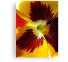 Yellow Pansy Deux Canvas Print