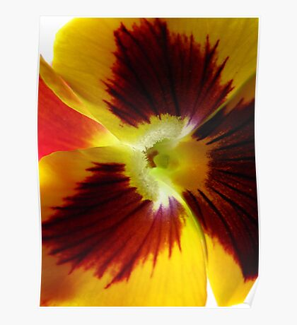 Yellow Pansy Deux Poster