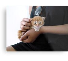 Holding hands with Maine Coon Metal Print