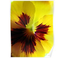 Yellow Pansy Une Poster