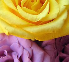 Yellow and Purple Roses by tobeandtohave