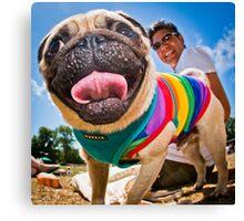 Pug - Brighton Pride Dog Show Canvas Print
