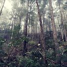 Hidden forest 2 by ozzzywoman
