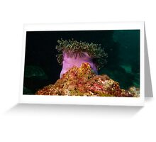Giant Anemone after Sunset Greeting Card