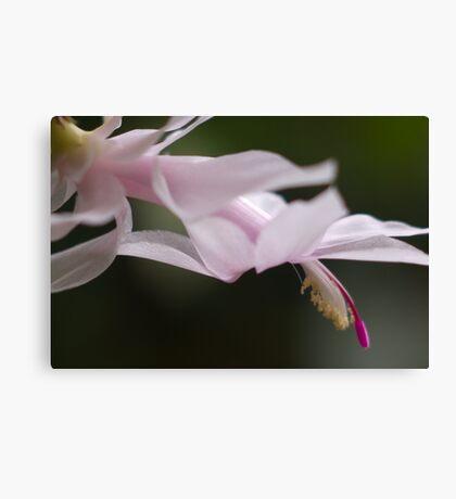 Come Closer  (Flutterer) Canvas Print