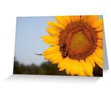 Growing Sun Greeting Card