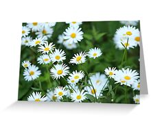 Wild daisies Greeting Card