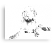 Hungarian Wirehaired Vizsla Canvas Print