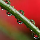 Droplets in red and green by PhotoTamara